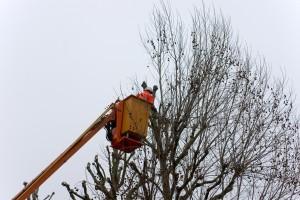 soumissions arboriculture élagage abattage arbre