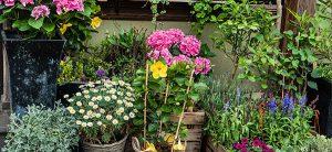 Cachez vos murs avec des plantes vous causera un beau jardin muni d'un aménagement paysager idéal et d'un espace vert joli.
