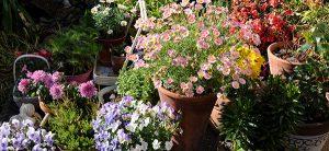 Pensez plusieurs niveaux quand vous voudrez changer votre jardin en ajoutant des paniers ou des fleurs surélevées dans votre concept pour aménager votre paysage.